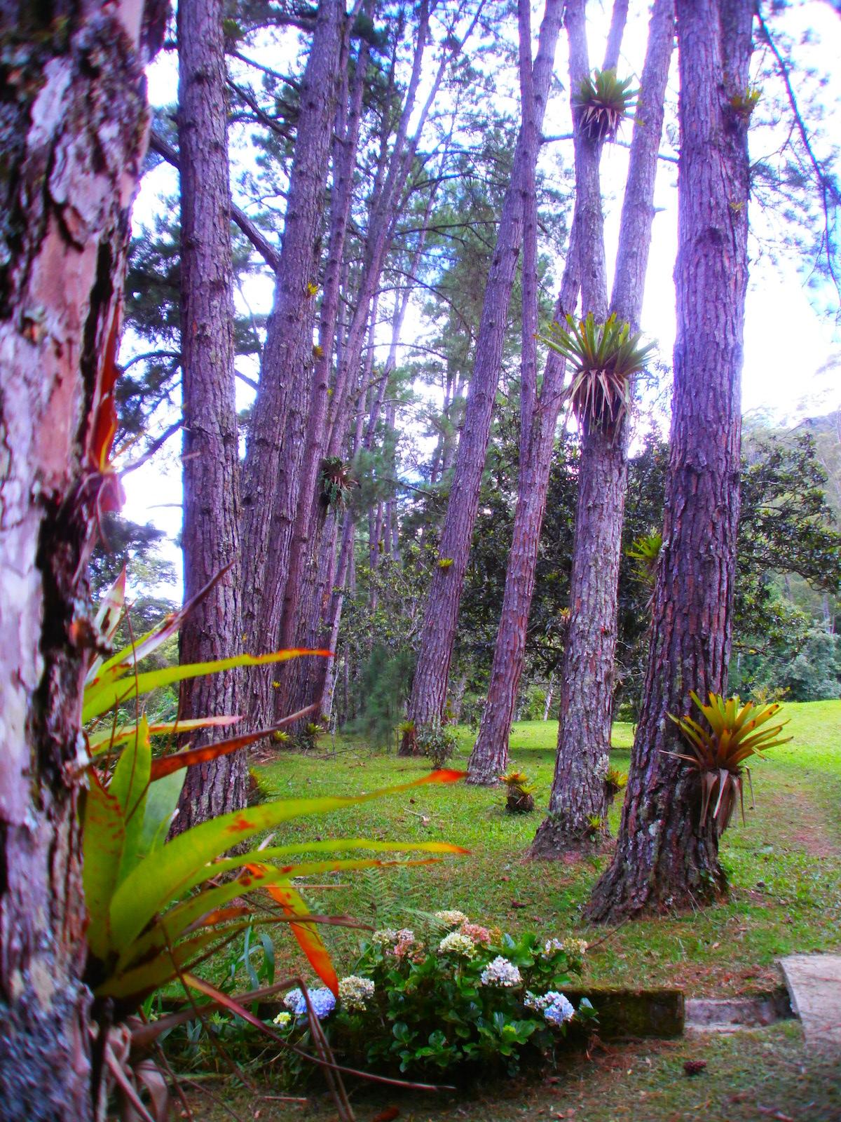 Imagens de #344097 Chalé Cabana do Pica Pau do Campo Refugio Ecológico Amadamata 1200x1600 px 2816 Box Banheiro Macae